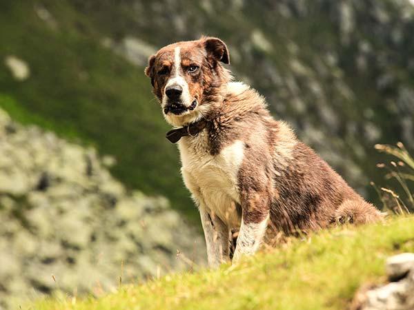 The North End Dog Walker: Boise Dog Walking & Pet Setting